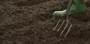 Soils & Garden Mixes